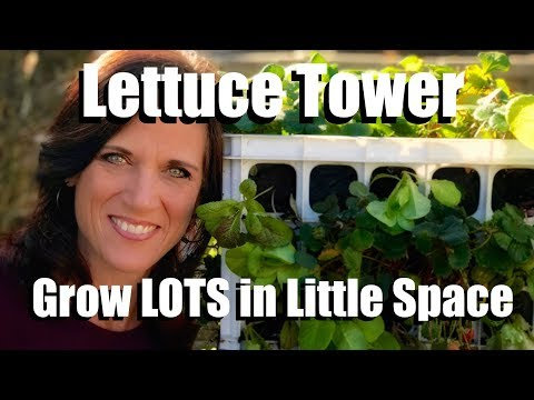 Planting a Lettuce Tower - Grow a Lot in a Little Space