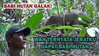 Nembak Babi Hutan Pakai Senapan Uklik... Gini Reaksi Babinya...