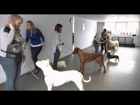 Подготовка собак к выставке