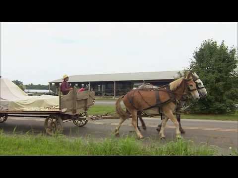 Mennonite Produce Auction
