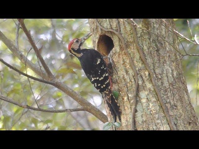 奄美は「オンリーワンの島」 身近に世界遺産級の生き物