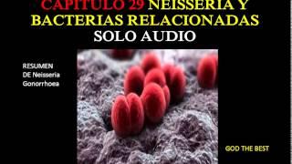 NEISSERIA Y BACTERIAS RELACIONADAS-audio  (Resumen de N. Gonorrhoeae) Microbiologia de Murray