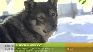 Ямальская прокуратура встала на защиту бездомных животных