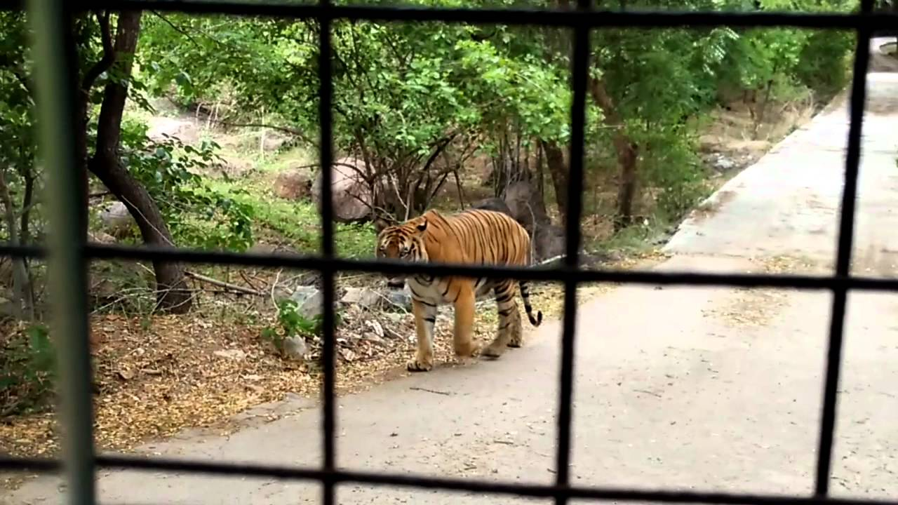 Hyderabad Zoo Safari Ride Youtube