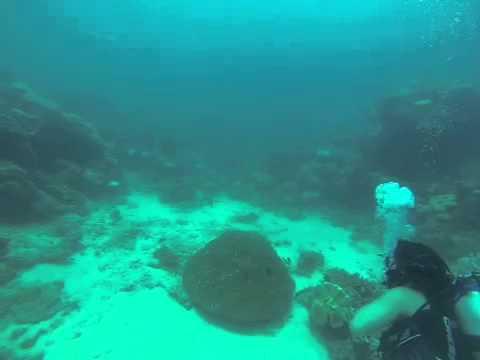 Fiji dive 1 The Zoo vid 3