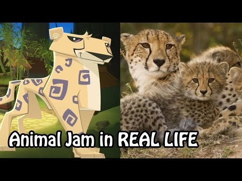Animal Jam In Real Life - If the AJ animals were real!