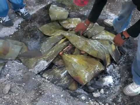 Barbacoa de chivo con penca de maguey en san jose de for Ingredientes para preparar barbacoa