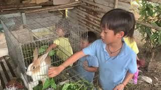 Rio, Cherry, Sunny và Mio lần đầu cho thỏ ăn