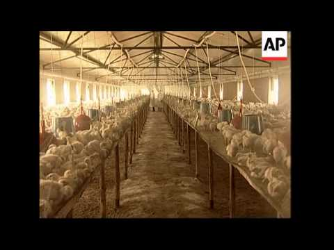 World Bank comment on fund to fight bird flu, adds UN comment