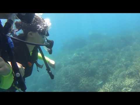 2016.09.28 Great Barrier Reef Scuba-diving in Cairns, Australia.