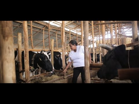 USAID's AGP-LMD: Enhancing Ethiopia's Meat and Dairy Sectors
