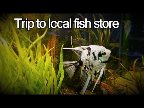Trip To The Local Fish Store. + New Angelfish.