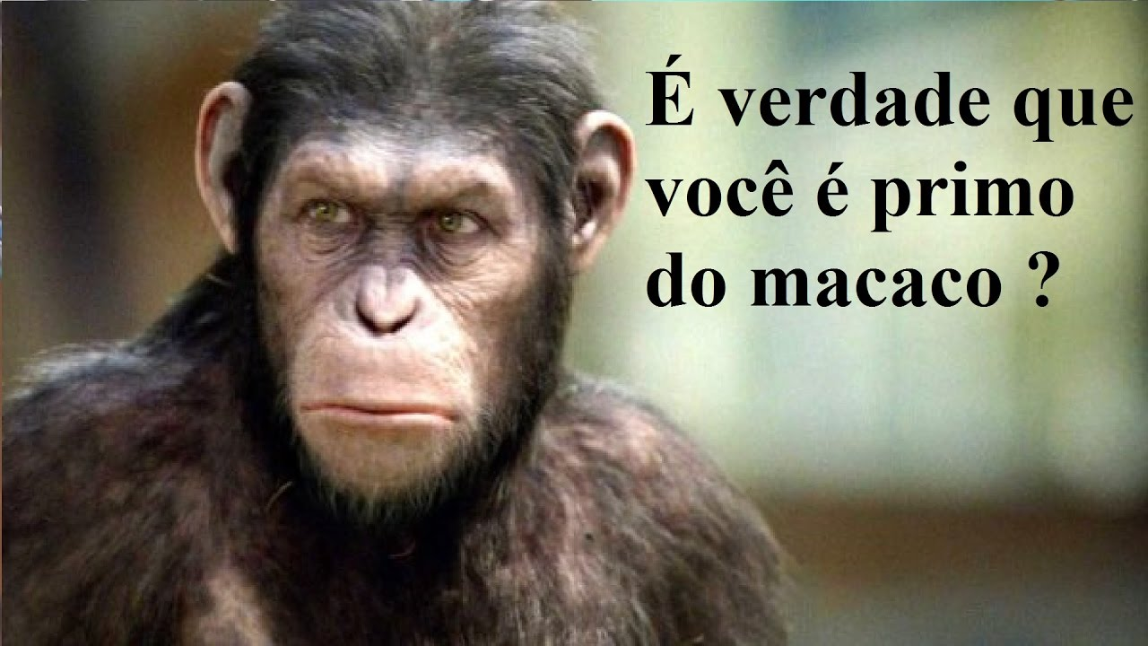 fruto sagrado primo do macaco