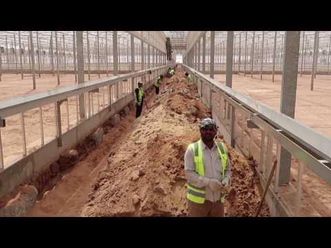 Al Blahad Farm – Saudi Arabia (Desert Growing)