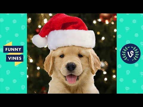 [1 HOUR] TRY NOT TO LAUGH - Best Funny Animals of The YEAR!   December 2018