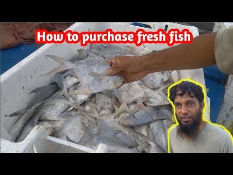 How To Purchase Fresh Fish