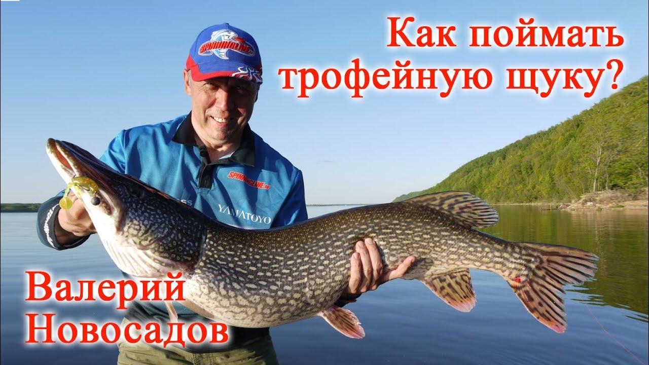 Купить свимбейты недорого в рыболовном магазине мотай на ус ✓ быстрая доставка по россии. Оплата при получении ☎ +7 812 645-17-79.