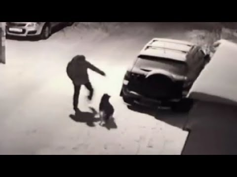 Eddie & Rocky - VIDEO: Guy Tries To Kick Dog, Karma Instantly Intervenes