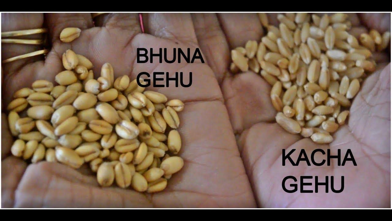 बनाइये बिना रेत के भुना गेहूं घरपे मिनटों मैं | Bhuna Gehu Recipe | How to  make Bhuna Gehu at home