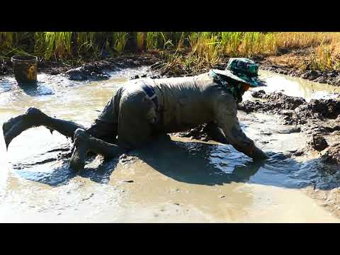 Unbelievable Fishes A Lot !!! My Fishing Today Is Catch Fishes  In Mud  After Spill Water