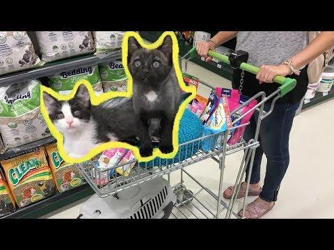 Mis gatitos bebés Luna y Estrella jugando en el supermercado para animales / Funny cats