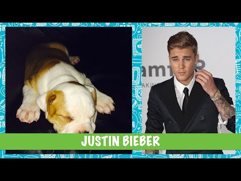 Guess Who: Celebrity Pets