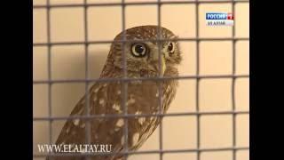 В Горно-Алтайске заработал необычный зоопарк
