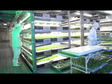 Vegetable Factory by the Vertical Farming. Green Green Earth