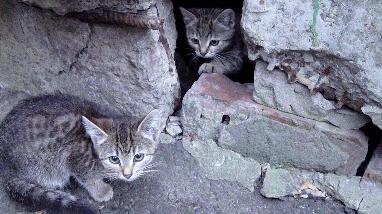 two kittens still live under a concrete slab
