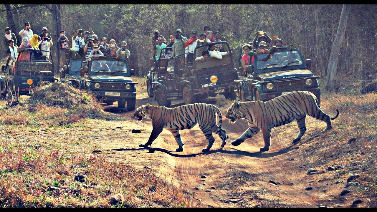 Tadoba jungle safari - an experience full of wild life Part-2 17-May-2017 -#21