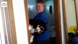 Кошки и собаки  в ванной = ПОДБОРКА  (УГАР)