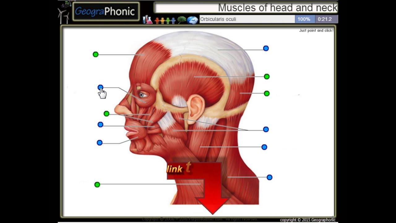 ejercicio anatomía, músculos de la cabeza y el cuello - YouTube