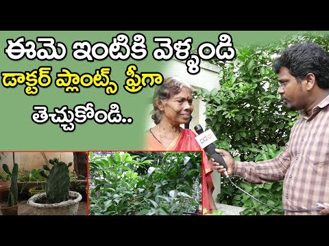 Ayurveda Plants | Kukatpally | Hymavathi | ఈ మొక్కలు మీ ఇంట్లో ఉంటే డాక్టర్స్ ఉన్నట్టే