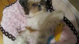Winnie's Puppyhood: Experiencing New Things, 13 - 16 Weeks