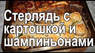Запеченная стерлядь в духовке с картошкой целиком – рецепт как запечь стерлядь с грибами и картошкой