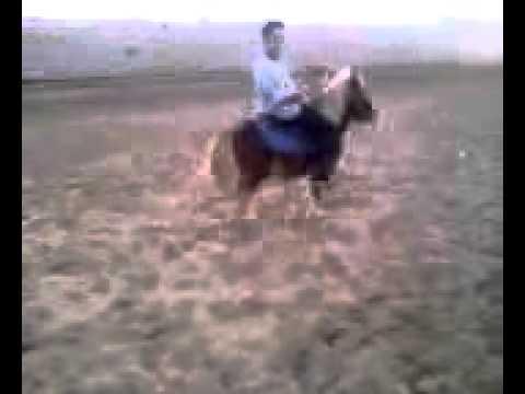 ricardo montanez en pony