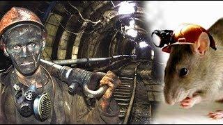 Памятник отважному крысу! Удивительная история, рассказанная одним шахтером.