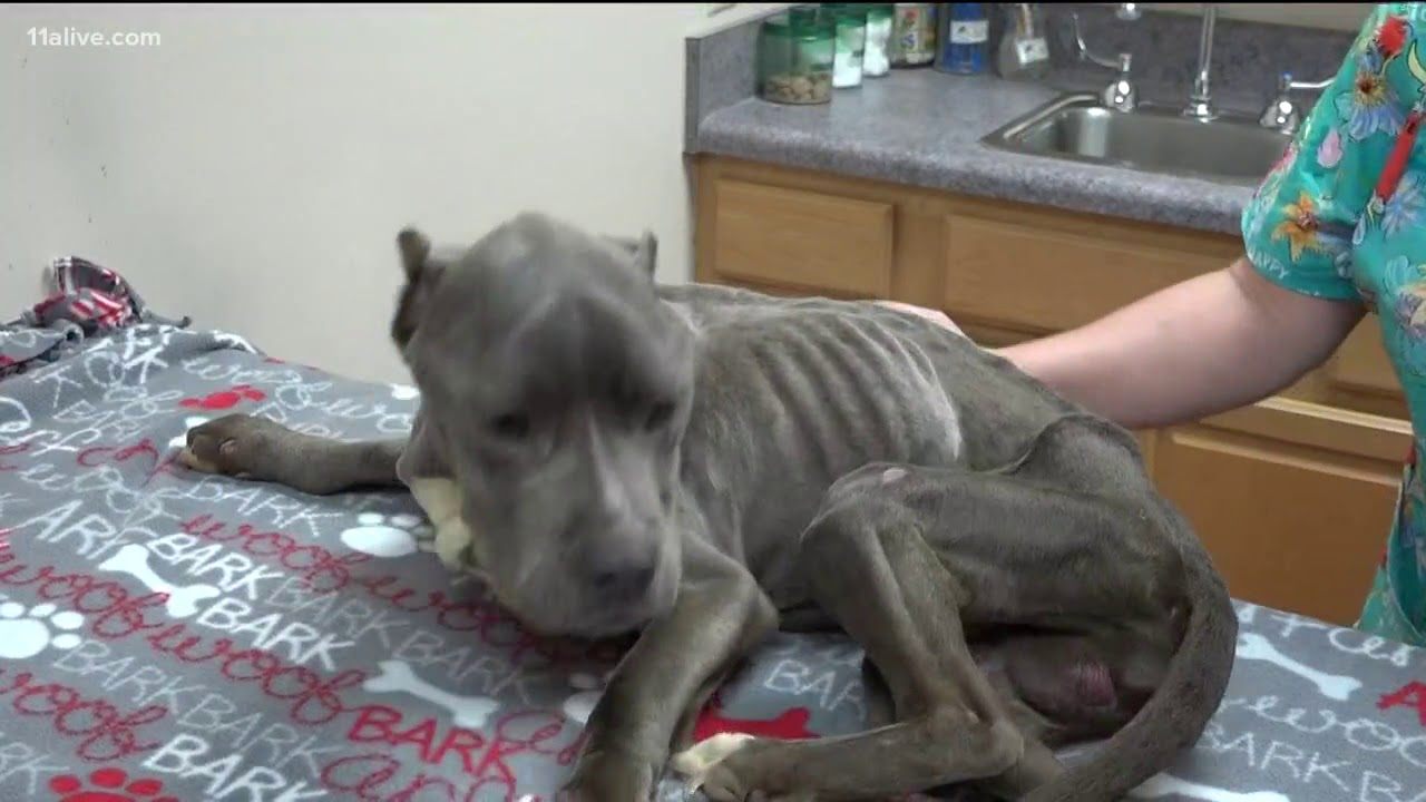 Woman arrested in animal cruelty case of 'Mikey' the dog