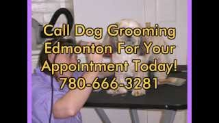 Dog Grooming Edmonton-call 780-666-3281 For Dog Grooming!