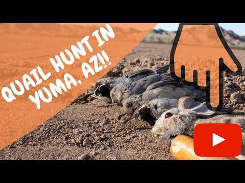 Arizona Quail Hunting | How To Quail Hunt | Yuma AZ | Hunting Arizona | Harvestlandtv