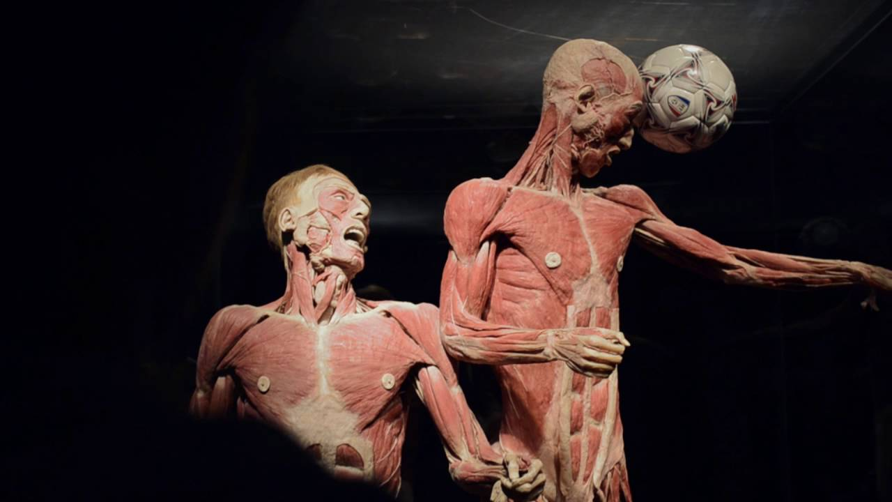 body worlds exhibit essay 1) what is body worlds body worlds is a traveling exhibit of plastinated human specimens created by german anatomist gunther von hagens plastination is a technique founded by von hagens in the late 1970s, creates durable.