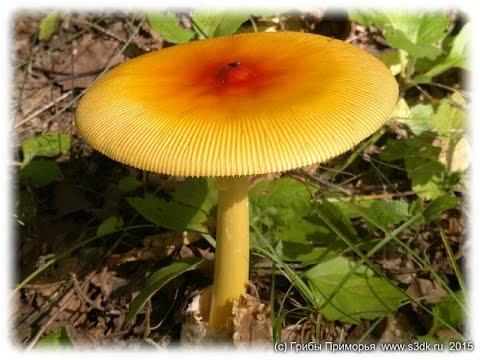 фото грибы приморского края