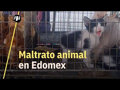 Maltrato animal en tianguis; ¿cómo pintan los pollitos?