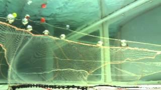 Danish seine and bottom trawl