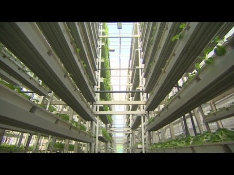Vertical farms solve land problem