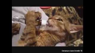 Русские коты и кошки ни где не пропадут