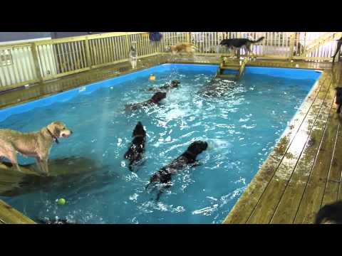 Summer Pool Party for Dogs