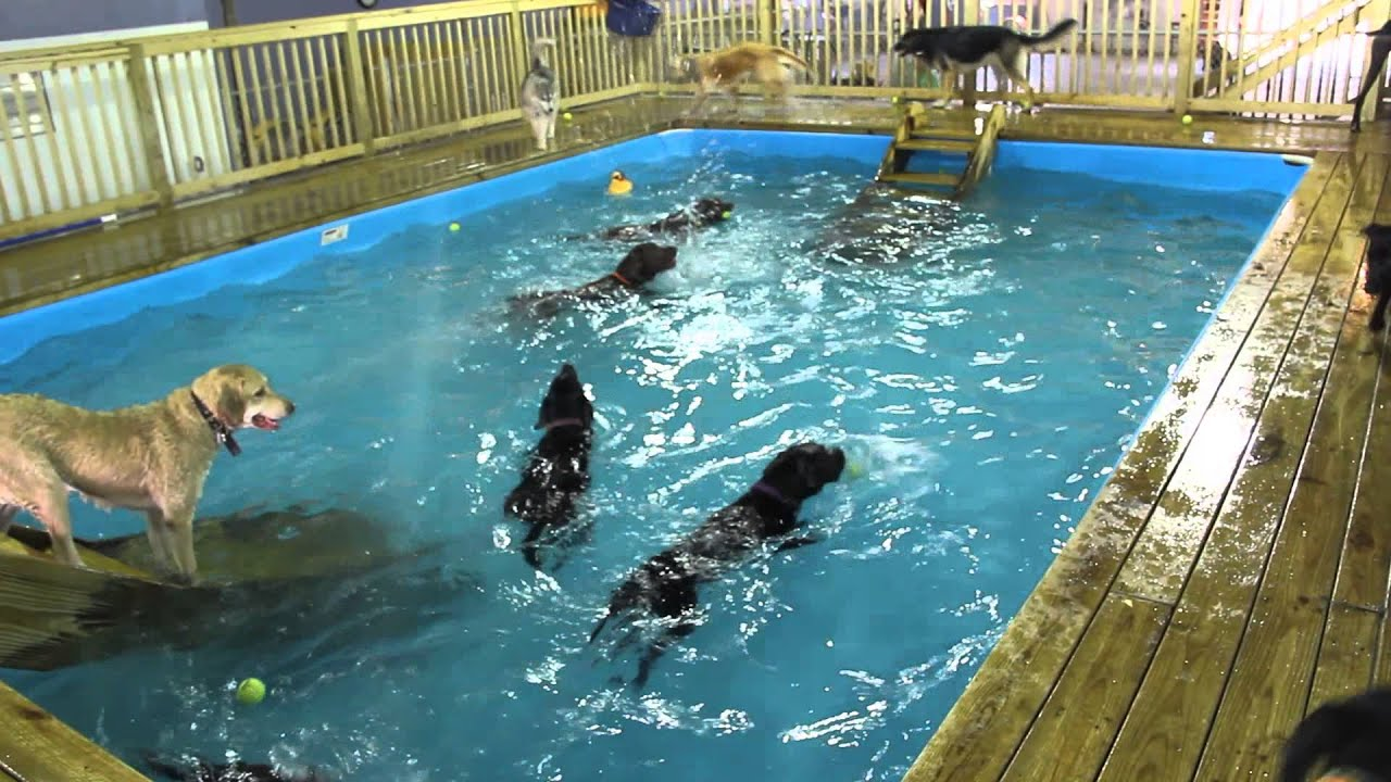 Summer Pool Party For Dogs Youtube
