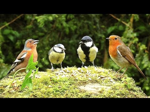 Videos for Cats to Watch : Birds on The Little Hill