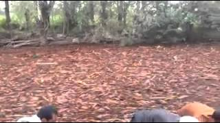 The most insane flash flood ever lots of debris - You have not seen this before